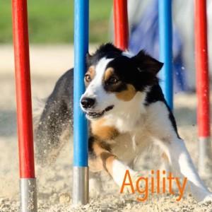 Agility- Link